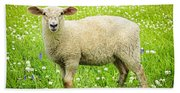 Sheep In Summer Meadow Bath Towel