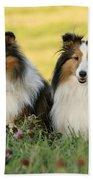 Shetland Sheepdogs Bath Towel