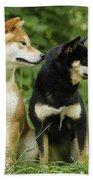 Shiba Inu Dogs Bath Towel