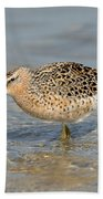 Short-billed Dowitcher, Breeding Bath Towel