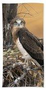 Short-toed Snake Eagle Circaetus Gallicus Bath Towel