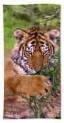 Siberian Tiger Cub Endangered Species Wildlife Rescue Bath Towel