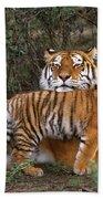 Siberian Tiger Cub Guarding Mom Wildlife Rescue Bath Towel