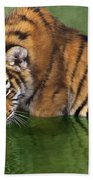 Siberian Tiger Cub In Pond Endangered Species Wildlife Rescue Bath Towel