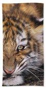 Siberian Tiger Cub Panthera Tigris Altaicia Wildlife Rescue Bath Towel