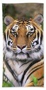 Siberian Tiger Staring Endangered Species Wildlife Rescue Bath Towel
