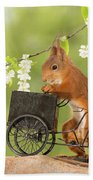 Side View Of Red Squirrel Playing Bath Towel