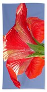 Side View Of Scarlet Red Hibiscus In Bright Light Bath Towel