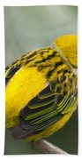 Silver-throated Tanager - Tangara Icterocephala Hand Towel