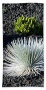 Silversword Plant Bath Towel