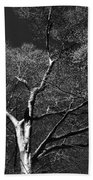 Single Tree With New Spring Leaves In Black And White Bath Towel
