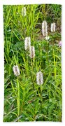 Sitka Burnet And Tall Fireweed In Katmai National Preserve-ak Bath Towel