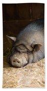 Sleeping Pig Bath Towel