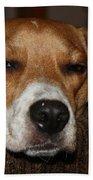 Sleepy Beagle Bath Towel