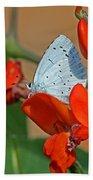 Small Blue Butterfly Bath Towel