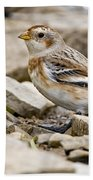 Snow Bunting Pictures 43 Bath Towel