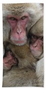 Snow Monkey And Young Bath Towel