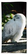 Snow Owl  Bath Towel