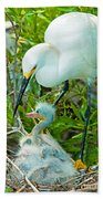 Snowy Egret Tending Young Bath Towel