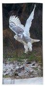 Snowy Owl In Florida 10 Bath Towel
