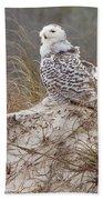 Snowy Owl In Florida 14 Bath Towel
