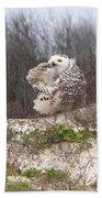 Snowy Owl In Florida 4 Bath Towel