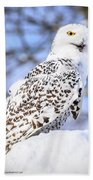 Snowy Owl Look Out Hand Towel