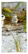 Snowy Plover And Chick Bath Towel