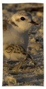 Snowy Plover Transformation Into A Spiderbird 1 Bath Towel