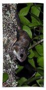 Southern Flying Squirrel Bath Towel