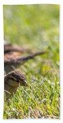 Sparrows Bath Towel