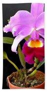 Spotlight On Purple Potted Cattleya Orchid Bath Towel