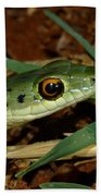 Spotted Bush Snake Philothamnus Semivariegatus Bath Towel