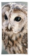 Spotted Owl Bath Towel