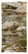 Spotted Sandpiper Pictures 36 Bath Towel