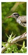 Spotted Sandpiper Pictures 48 Bath Towel
