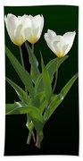 Spring - Backlit White Tulips Bath Towel