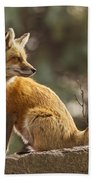 Spring Fox Bath Towel