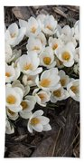 Springtime Abundance - A Bouquet Of Pure White Crocuses Bath Towel