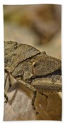 Spur-throated Grasshopper Bath Towel
