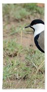 Spur-winged Lapwing Bath Towel