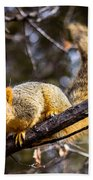 Squirrel 1 Bath Towel