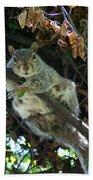Squirrel By Nest Bath Towel