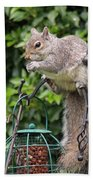 Squirrel Eating Nuts Bath Towel