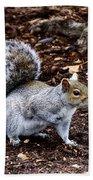 Squirrel In The Park-boston  V6 Bath Towel