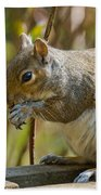 Squirrel Bath Towel