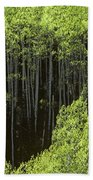 Stand Of Birch Trees New Growth Spring Rich Green Leaves Bath Towel