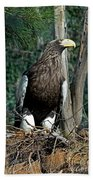 Stellers Sea Eagle Bath Towel