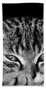 Stray Kitten Bath Towel
