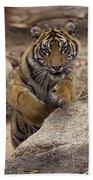 Sumatran Tiger Cub Jumping Onto Rock Bath Towel